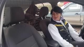 Решётка для перевозки собаки в автомобиле avto-r.info