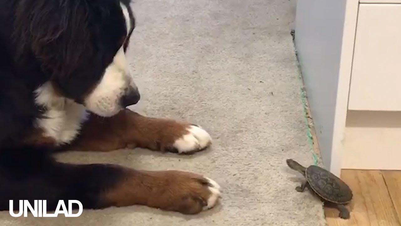 unilad dog video