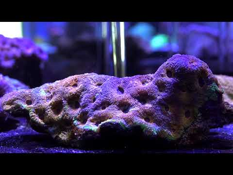 High End Local Saltwater Fish Store In Dubai