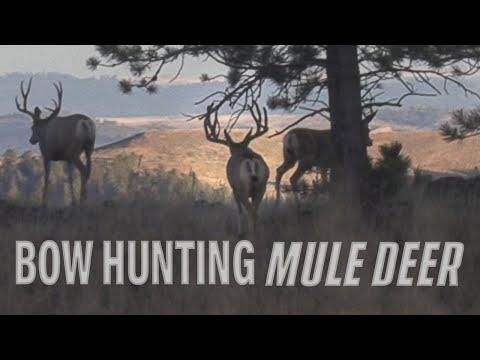 Bowhunting Big Bucks – Public land Mule Deer Hunt (Eastmans')