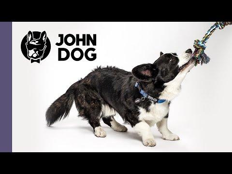 Kółeczko, czyli naucz psa sztuczek  - TRENING PSA - John Dog