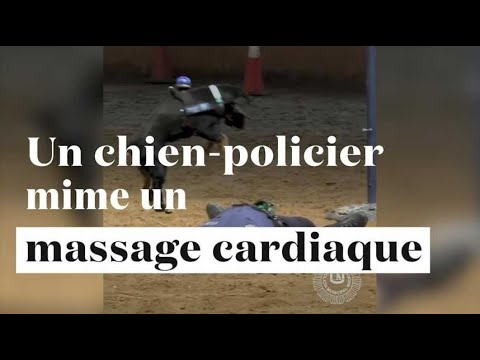 poncho le chien policier qui sait faire un massage cardiaque youtube. Black Bedroom Furniture Sets. Home Design Ideas