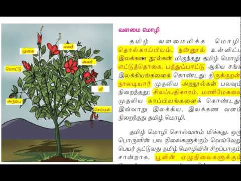 6th standard (NEW SYLLABUS) TAMIL LESSON 1 (PART1)