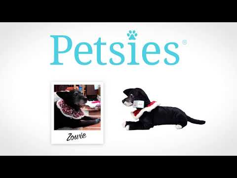5 People Surprised by Custom Stuffed Animal Lookalike to Remember a Past Pet - Petsies