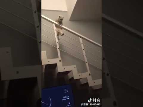 Cat Series: When a kitten likes to play with the staircase
