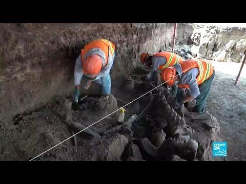Des dizaines de squelettes de mammouths sous le chantier de l'aéroport de Mexico