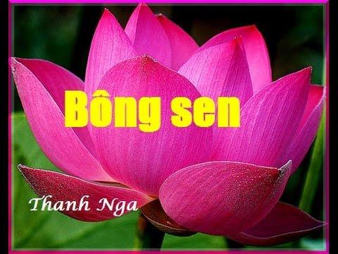 Bông sen - NSUT Thanh Nga