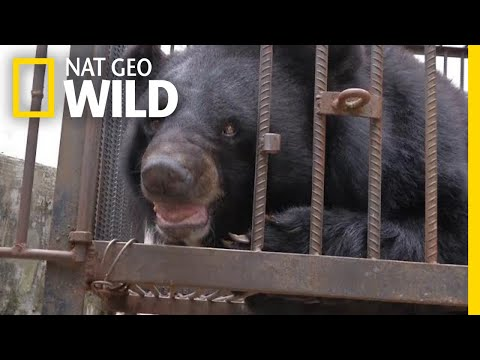This Family Thought They Were Raising a Dog—It Was a Bear | Nat Geo Wild