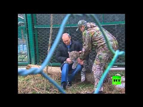 بوتين يقود الـ'نيفا'
