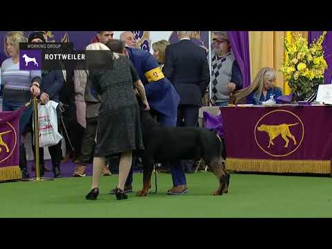 Rottweilers | Breed Judging 2019