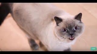 """Конкурс """"Главная кошка Ярославля"""" от Радио Дача! Конкурс красоты для животных"""