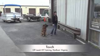 German Shepherd Huck, 2-week Board And Train! Best Dog Training, Northern Virginia, Dc, Md