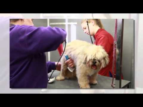 Susan ross dog grooming youtube susan ross dog grooming solutioingenieria Image collections