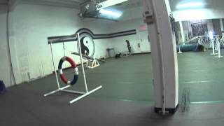 Junior American Cocker Spaniel Agility Training Beginner 07/26/2015 @paws In Motion
