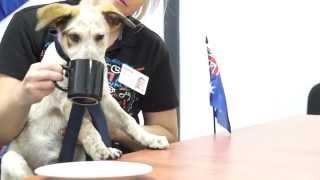 Rspca Queensland Pets As G20 Delegates Brisbane