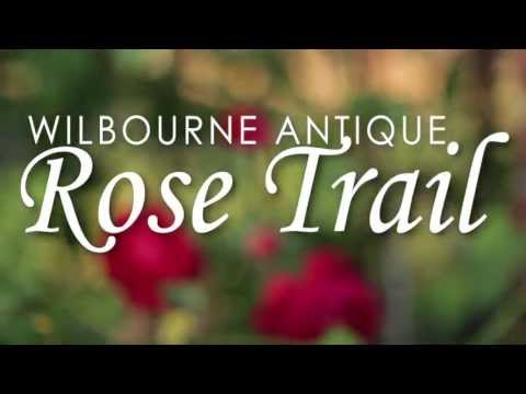 Wilbourne Rose Trail