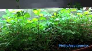 DIY Indoor Aquaponics - Herb Garden