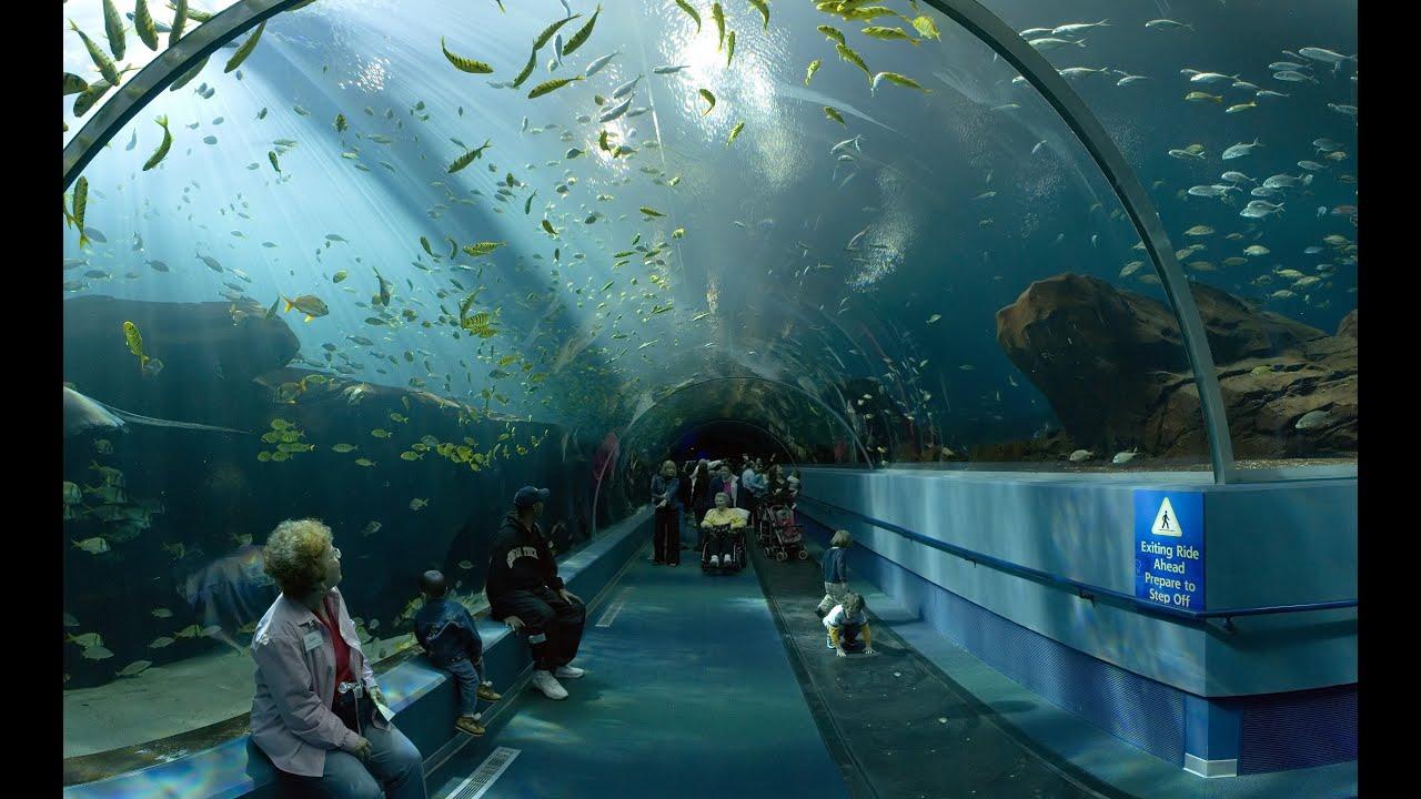 Купить аквариум в магазине и интернет магазине. Аквариумный гипермаркет.