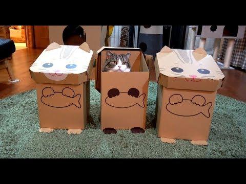 3ねこに加わるねこ。-Maru joins 3 cats.-