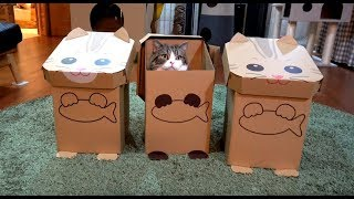 3ねこに加わるねこ。-Maru joins 3 cats.- thumbnail