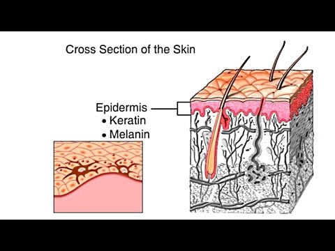 How The Skin Works Animation - Structure and Function of the Human Skin Video - Skin Layers Anatomy