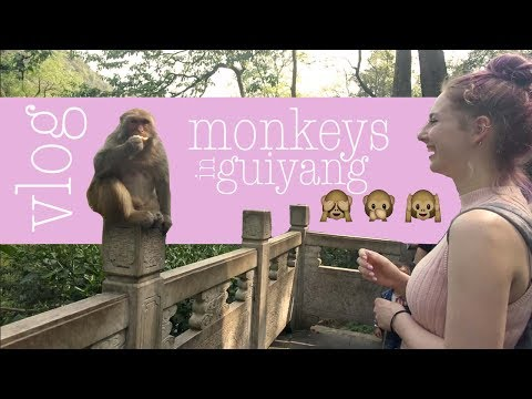 VLOG | monkeys in guiyang