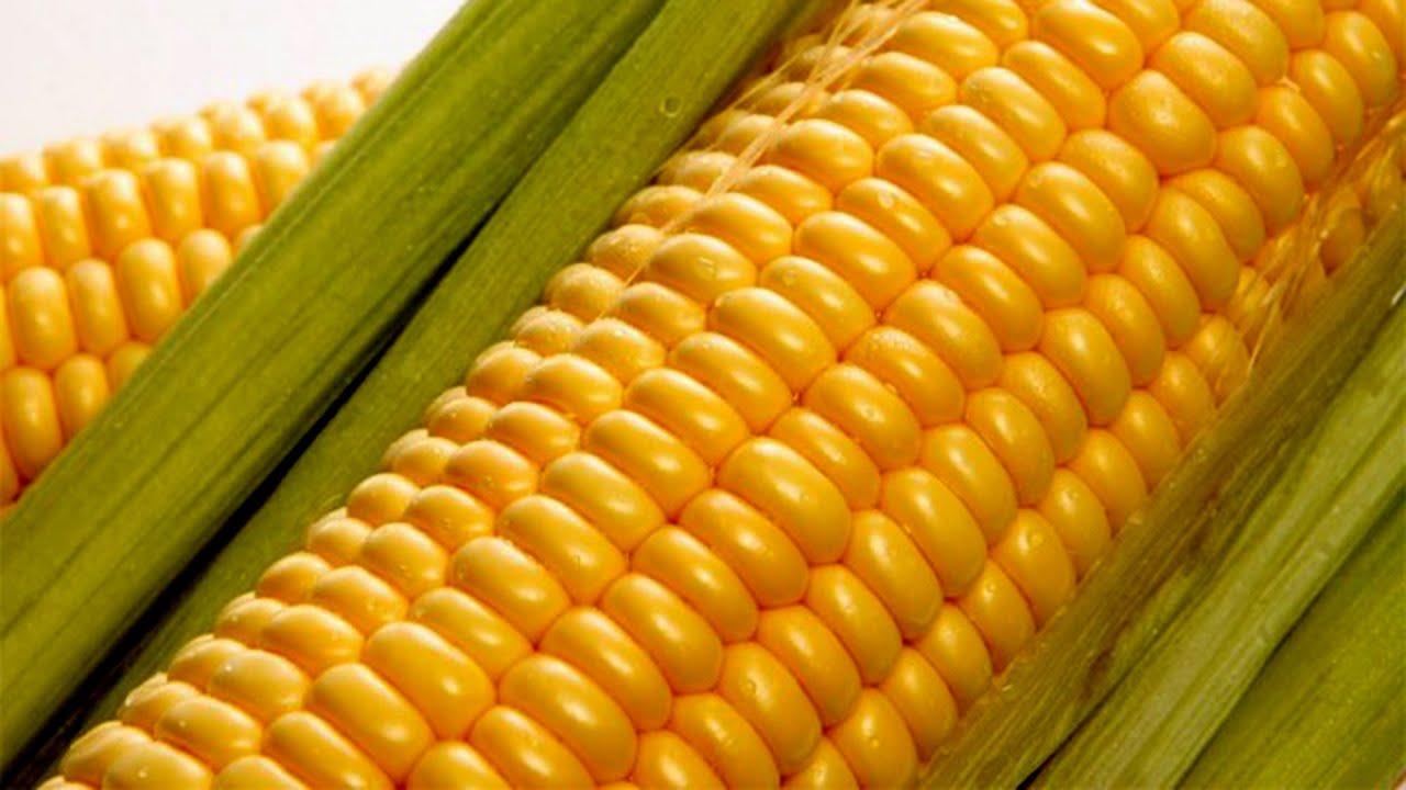 Как правильно насадить кукурузу на крючок.