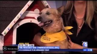 Dog Rescue San Diego - Bronco