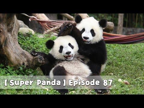 【Super Panda】Episode 87 | IPanda