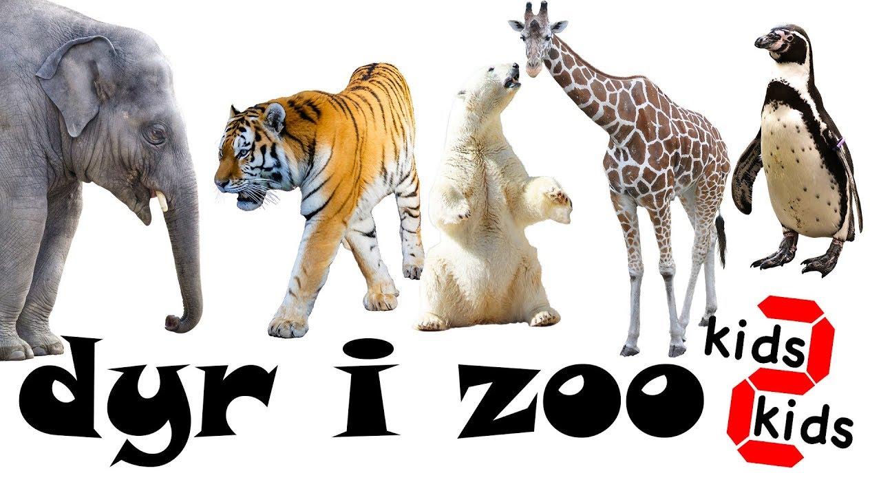 lær navnene på dyrene i zoo på dansk for børn - kids 2 kids - learn animals in danish