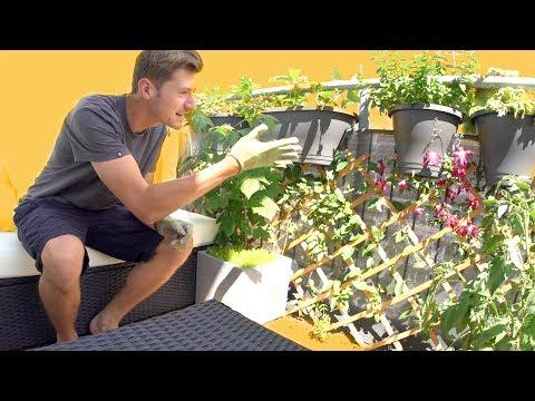 VORHER vs. NACHHER - Balkonpflanzen