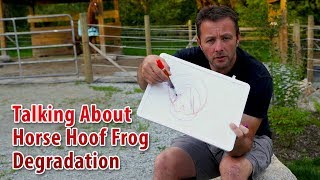 Talking In Detail About Horse Hoof Frog Degradation
