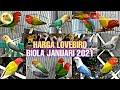 Update Harga Lovebird Mutasi Biola Januari   Mp3 - Mp4 Download