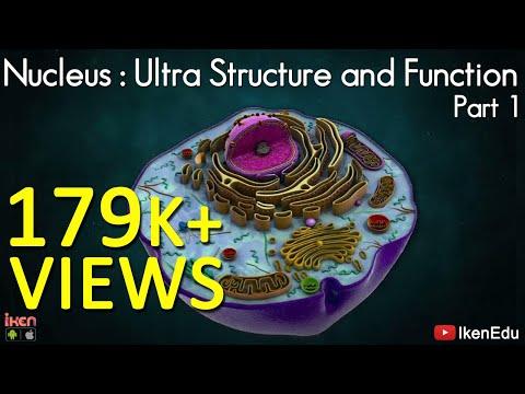 Nucleus: Ultra structure and Function- Part 1 - Iken Edu - CBSE - ICSE