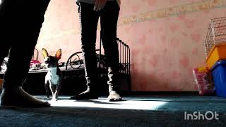 О чем думают собаки/ челлендж с собакой