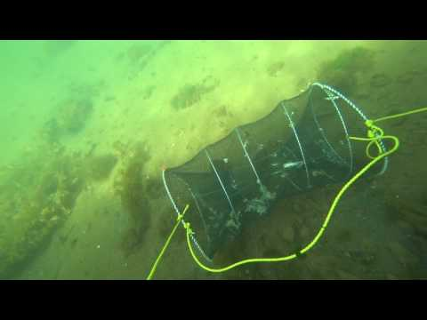 Amazing fish trap in sea# A very big fish trap came in flounder
