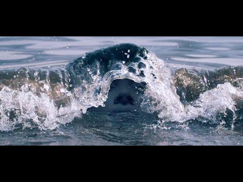 Crumb - Bones [Official Video]