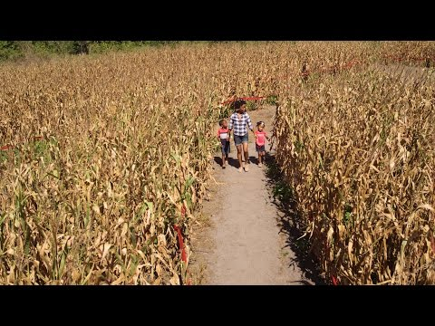 Florida Travel: Fun for Kids: Corn Maze in Mount Dora