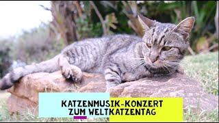 Katzenmusik-Konzert