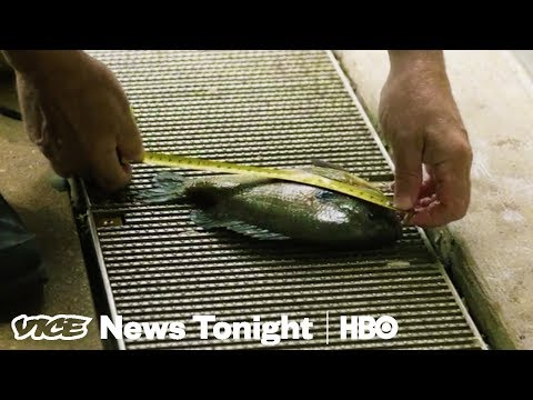 We Hired An Underwater Drone Operator To Inspect Chicago's Trump Tower (HBO)