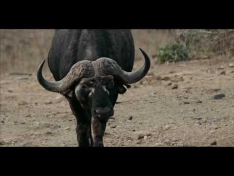 Jim Shockey's Hunting Adventures - When You Least Expect it - Outdoor Channel