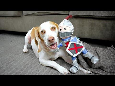 Dog vs. Knight Puppet: Cute Dog Maymo
