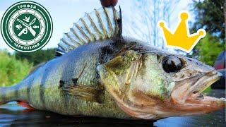 Такого вы точно НЕ ВИДЕЛИ ПОКЛЕВКИ на КАЖДОМ забросе Рыбалка на спиннинг