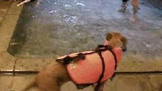 初めての水泳練習中。