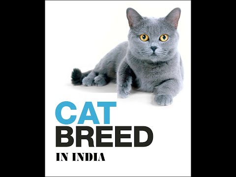 domestic Cat breeds in India,  Asia.