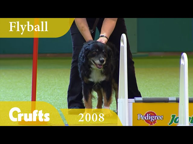 Flyball - Team Finals 2008 | Crufts Classics