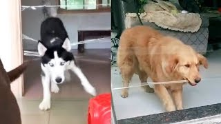 Dog or Cat React Intelligence with Clear Tape - Funny Dogs and Cats Reaction to Clear Tape