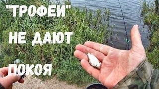 Риболовля на Донку і Фідер. Ловля ''трофейних'' карасів. Постійні покльовки :-)