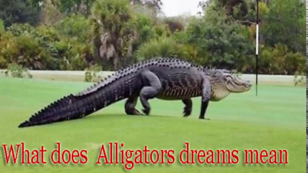 What do crocodiles dream about: interpretations 100
