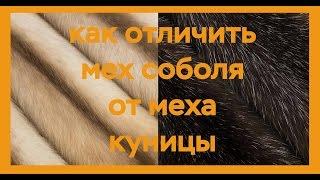 Как отличить мех соболя от меха куницы